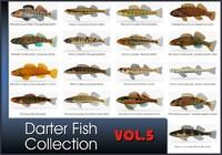 darter fish 3d model