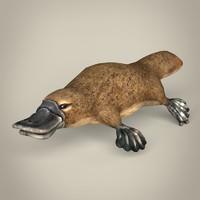 3d realistic platypus