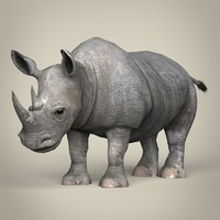 Low Poly Realistic Rhinoceros