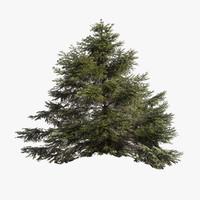 3d model of pine tree