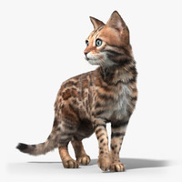 3d bengal cat 2 fur model