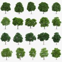 3d max 20 sorbus trees