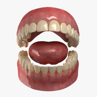realistic teeth gums tongue 3d ma