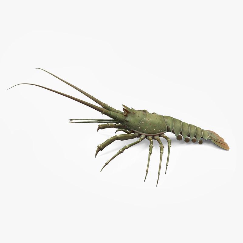lobster01.jpg