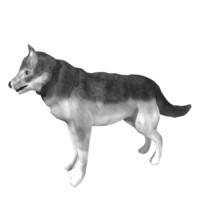 3d wolf l model
