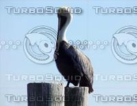 Pelican-Warf