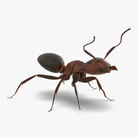 3d red ant rigged model