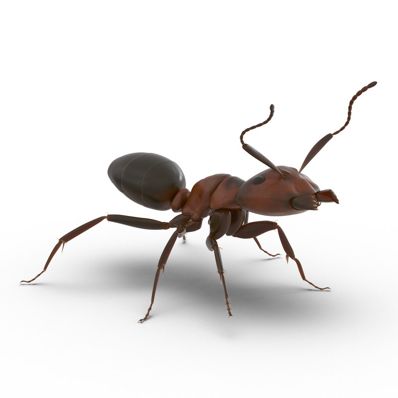 Read Ant Rigged 3d model 01.jpg