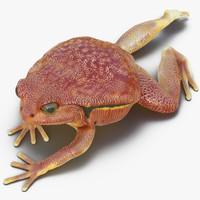 tomato frog pose 3 3d model