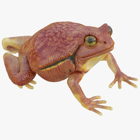 tomato frog pose 4 3d max