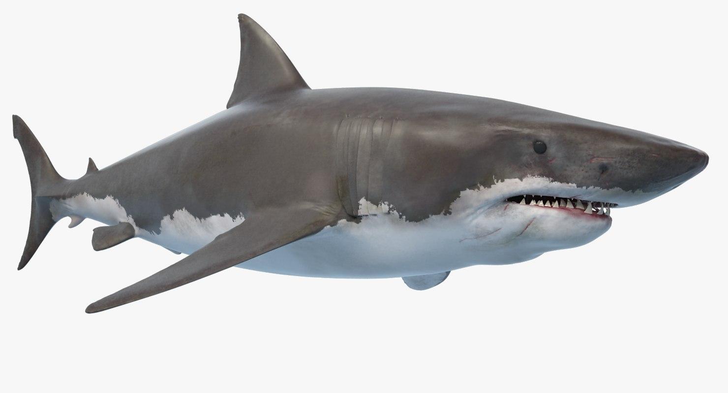shark_signature_wide.png