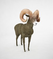 3d model bighorn sheep horn