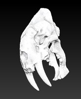 3d model animal skull