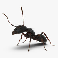 3d model black ant pose 2