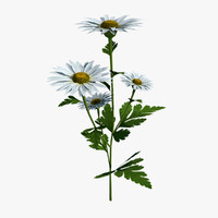 chamomile flower 3d model