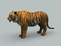 3d model tiger animations