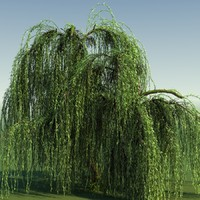 3d tree weeping willow