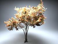 deciduous tree acer 3d model