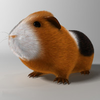 realistic guinea pig rigged 3d model