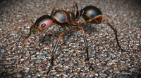 3ds ant