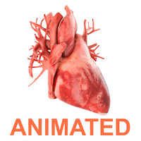 Human heart animated v3. Vray ready materials and scene of human heart