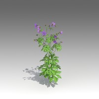 Geranium pratense Set_1400