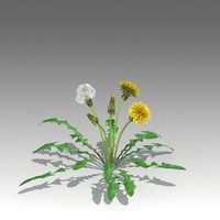 3d taraxacum officinale model