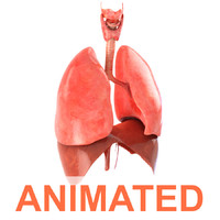 3d realistic human lungs animation