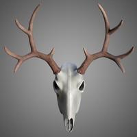 deer skull antlers 3d model
