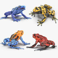 Poison Dart Frog Collection
