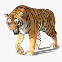 Tiger (3) (Animated) (Fur)