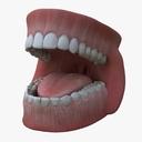 gums 3D models