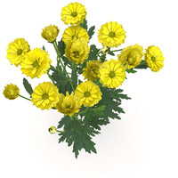 plant chrysanthemum 3d model