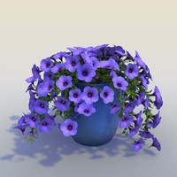 3d petunia flower model