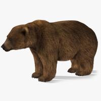 bear 2 fur 3d x
