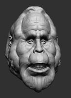 free head ztl zbrush 3d model