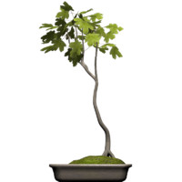 tree plant obj free