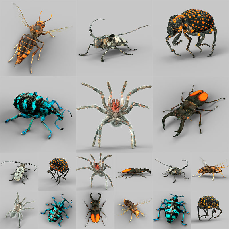 Insects Vol 1.jpg
