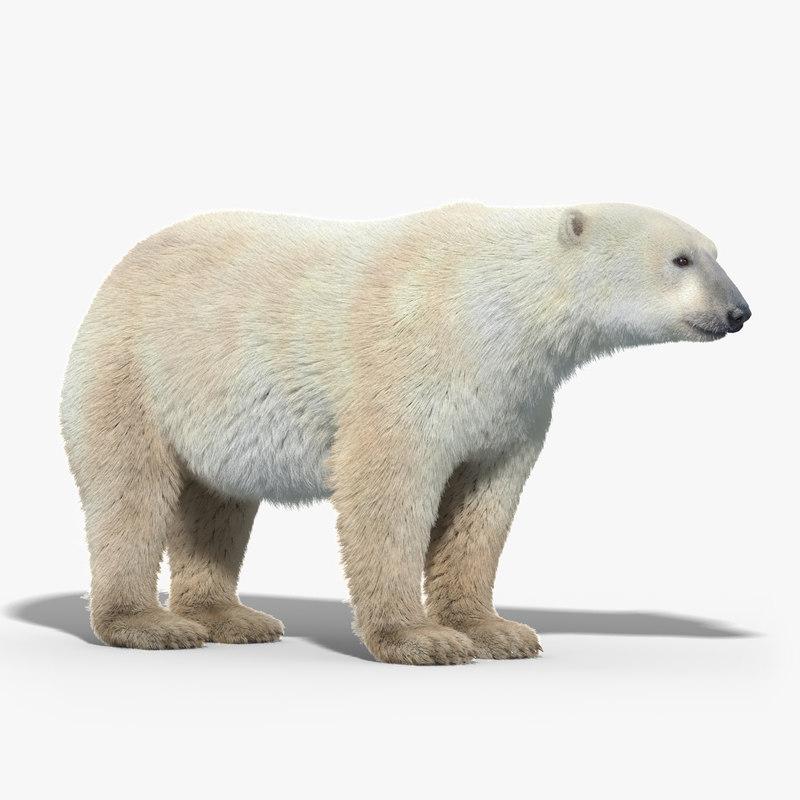 polar_bear_FUR_01.jpg