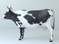 3d model cows unwrapped