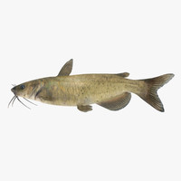 channel catfish 3d obj