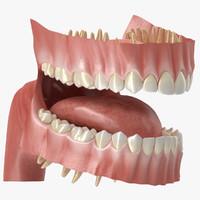 human teeth gums max
