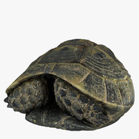3d model of turtle shell