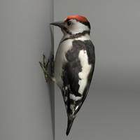 3d model woodpecker
