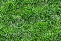 Grass 64