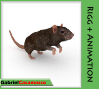 rat rattus animation 3d x