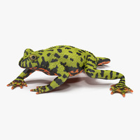 bellied toad frog pose 3d model