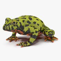 3d model bellied toad frog pose