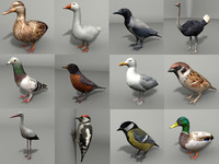 birds 12 3d model