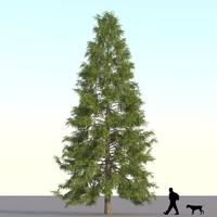 3d model of spruce tree